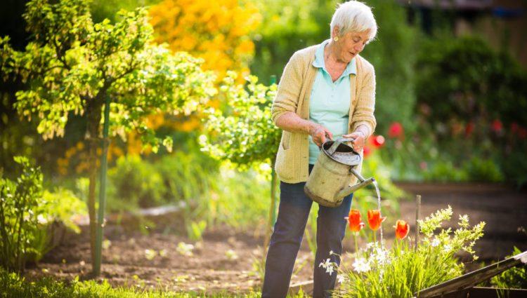 Gardening Is An Art