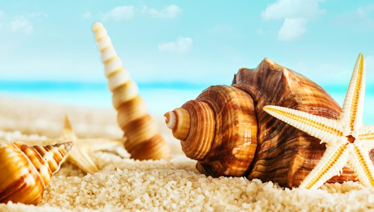 Top 4 Places To Get Unique Sea Shells In Flordia